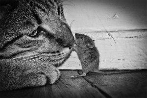 mouse_cat