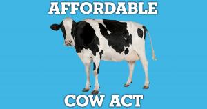 aca cow