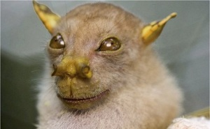 tube nosed bat